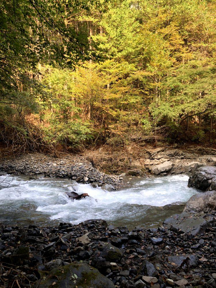 「NIPPONIA 小菅 源流の村」近くの観光スポット・秋の白沢滝